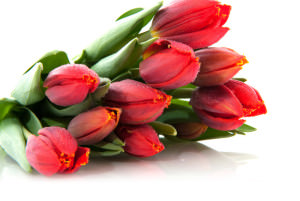 Сколько стоят цветы к 8 марта в Изюме