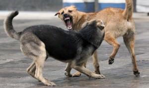 Что делать с бездомные собаки в Изюме