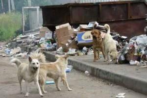Что делать с бездомными собаками в городе Изюме