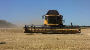 В районе собрано первую тысячу тонн зерна-1