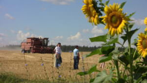 В районе собрано первую тысячу тонн зерна-2