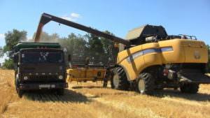 В районе собрано первую тысячу тонн зерна