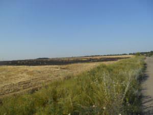 В харьковской области спасатели ликвидировали пожар на пшеничном поле-1