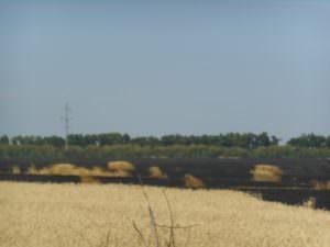 В харьковской области спасатели ликвидировали пожар на пшеничном поле