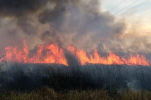 Спасатели ликвидировали 10 пожаров в природных экосистемах
