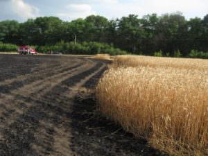 спасатели ликвидировали пожар на пшеничном поле-1