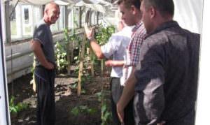 Идут работы по сбору винограда