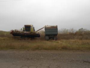 В Балаклейском р-н. собрали бесхозные поля подсолнечника