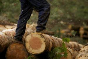 В Змиевском районе обнаружили подпольных лесорубов