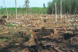 Незаконные вырубки лесов могут привести к экологической катастрофе на Харьковщине