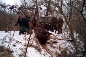 В Изюмском районе спасли лося от смерти