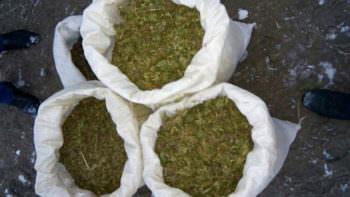 Прокуратура Изюма передала в суд дело мужчины, у которого дома нашли 25 кг каннабиса