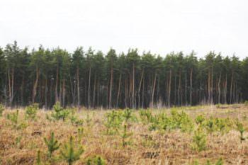 Экологическая акция «Будущее леса в твоих руках» начата в Изюмском районе