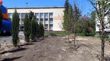 Что взамен спилянным елям посадили на центральной площади г. Изюма