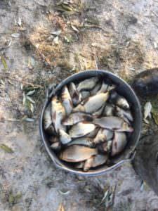 В Изюмском районе водоем зарыбили белым амуром, толстолобом и карпом