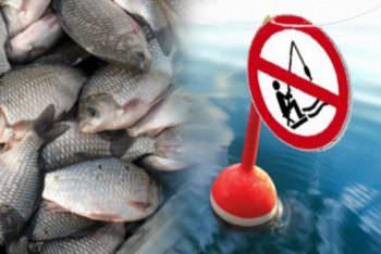 С сегодняшнего дня вылов рыбы в водоемах ЗАПРЕЩЕН