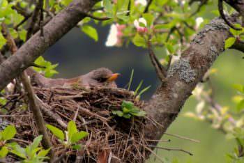 лес, природа, птичка, гнездо