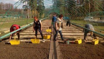 На Изюмщине в лесхозах проводят посев семян сосны обыкновенной