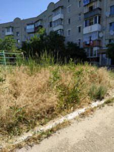 Некошеная трава возле многоэтажек - зачем это терпеть
