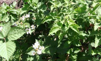 Изюмский плодово-ягодный питомник расширил ассортимент органической  продукции