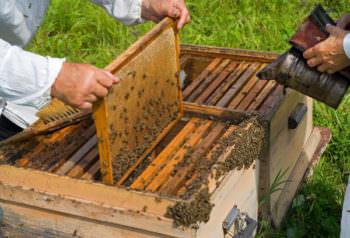 Массовым отравлением пчел занялась полиция