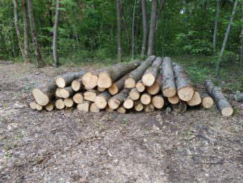 На Изюмщине заметили нелегальную вырубку леса