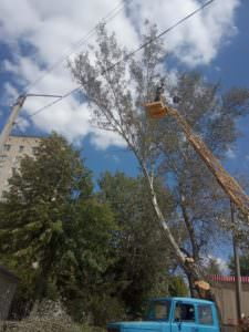 Коммунальщики срезают по городу аварийные деревья