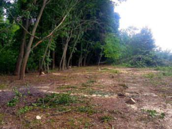 Изюмский лесхоз задержал незаконных лесорубов
