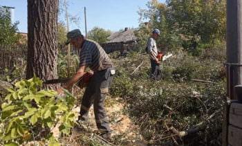 Коммунальщики продолжают срезать аварийные деревья в городе
