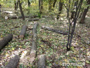 В Изюмском районе незаконно срезали деревья - полиция
