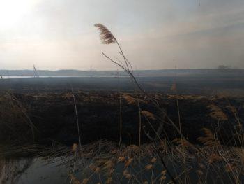 В Боровой женщина устроила масштабный пожар, сжигая малинник