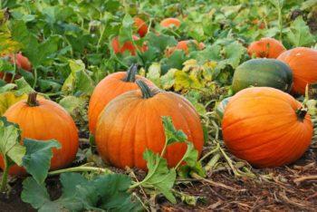 Активное употребление в пищу свежих сезонных фруктов и овощей