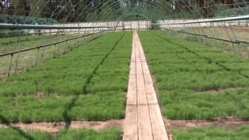Как работает ГП «Изюмское лесное хозяйство»