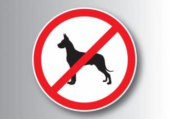 В Изюме выгуливать собак в неположенном месте нельзя
