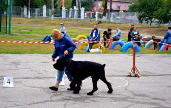 В Изюме прошла выставка собак: Фото