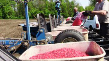 В Изюмском р-не аграрии завершили посевную кампанию