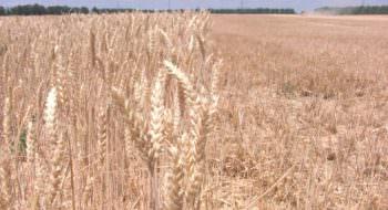 В Изюмском районе начался сбор ранних зерновых и зернобобовых культур