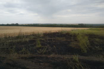 В Изюме спасено пшеничное поле от пожара