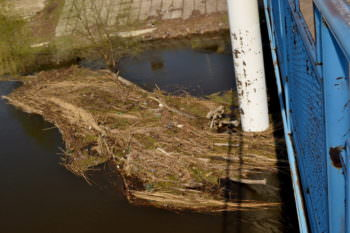 Река Северский Донец в Изюме нуждается в субботнике