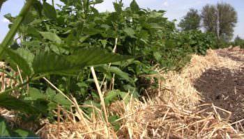 На Изюмщине развивается отрасль экологически чистых продуктов
