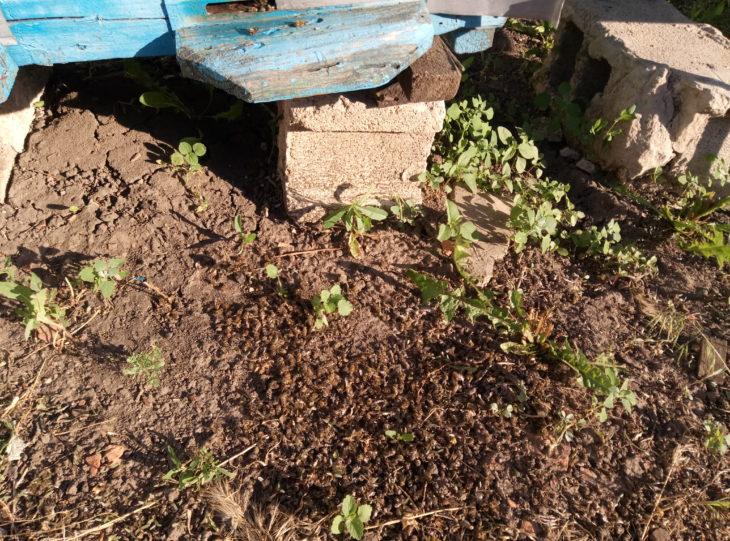 В Близнюковском районе массово гибнут пчелы (фото)