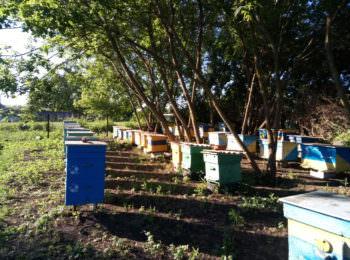 Под Харьковом массово гибнут пчелы (фото)